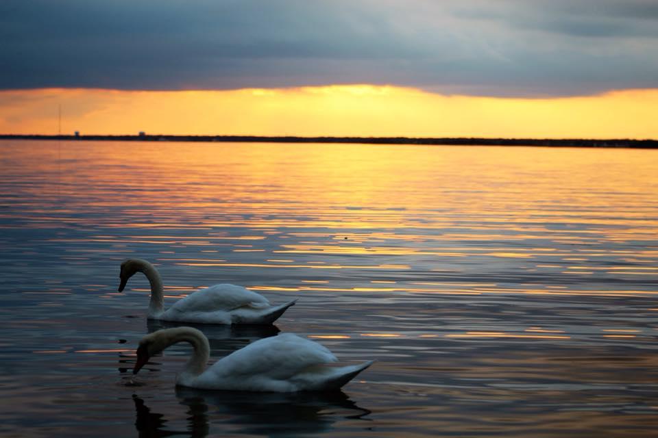 joanne swans